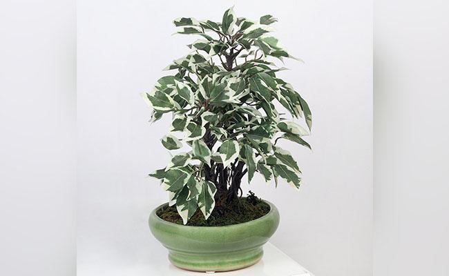 Artificial Safari Bonsai Plant