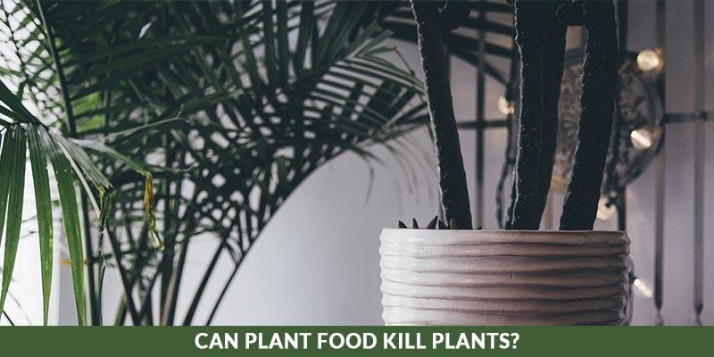 Can Plant Food Kill Plants?