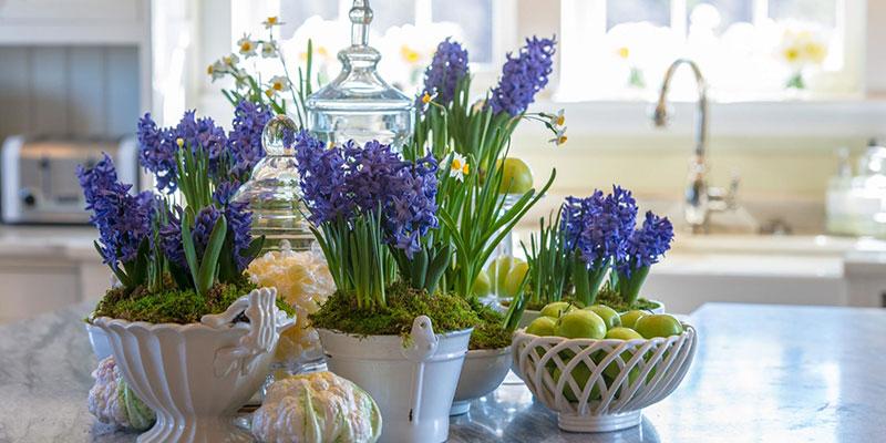 7 Characteristics of Water Hyacinth