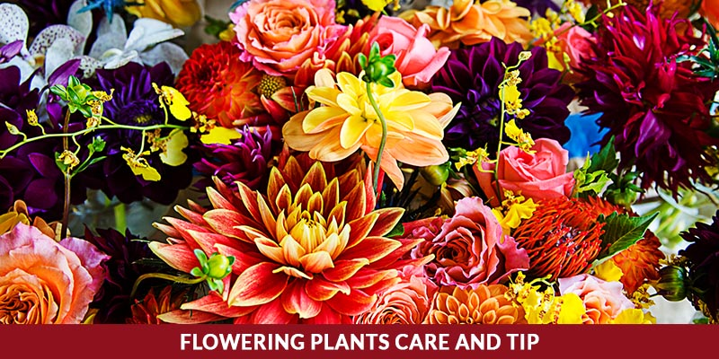 Blooming Plant Care and Tips