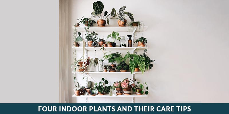 Four Under a Roof Plants and Their Care Tips