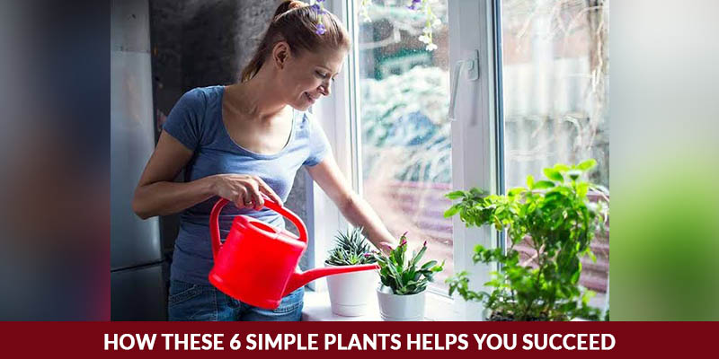 How these 6 Simple Plants Helps you Succeed