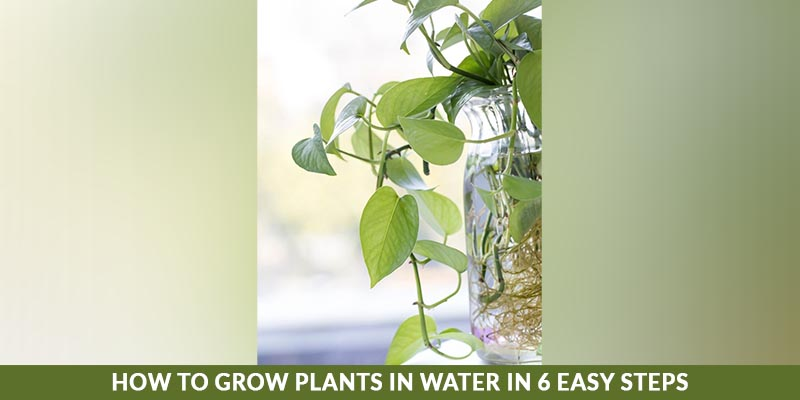 How to Grow Plants in Water in 6 Easy Steps