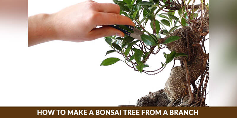 How to Make a Bonsai Tree from a Branch