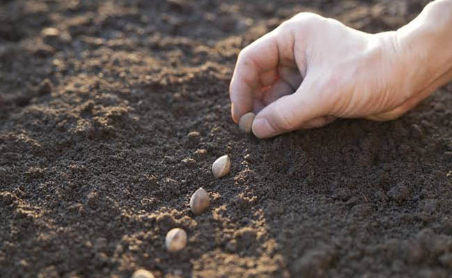 Learn how to sow seeds