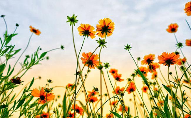 Types of flowering plant