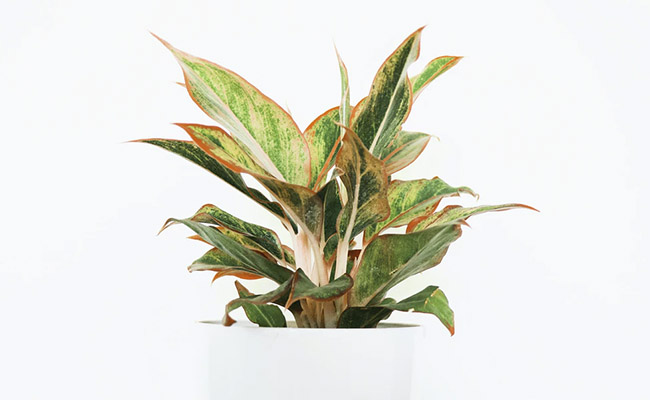 plants for study table