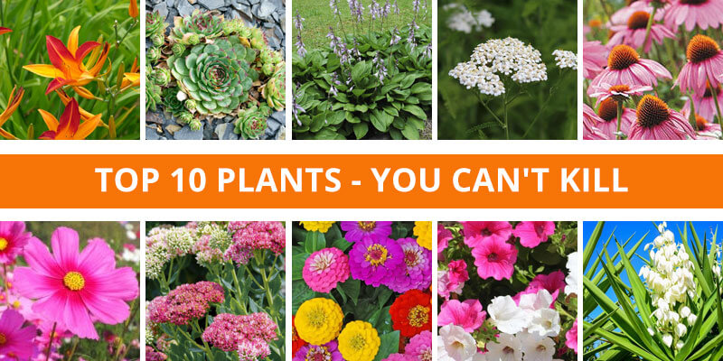 Top 10 Plants - You Can't Kill
