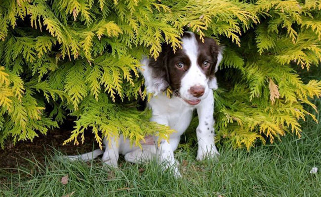 Poisonous Plants To Protect Your Pets From