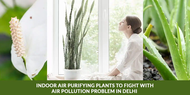 Indoor air purifying plants to fight with air pollution problem in Delhi
