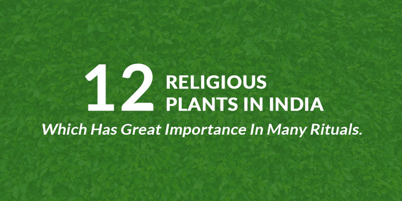 12 Religious Plants in India Which has Great Importance in Many Rituals