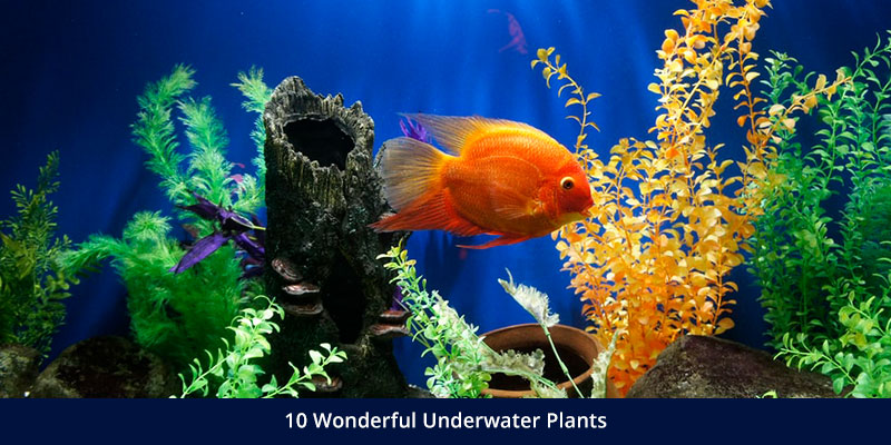 10 Wonderful Underwater Plants