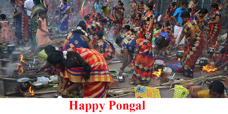 pongal celebration