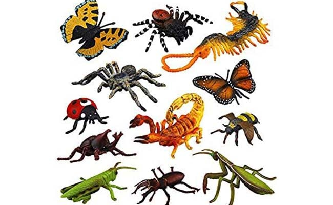 any-insect-or-reptile-living-or-toy
