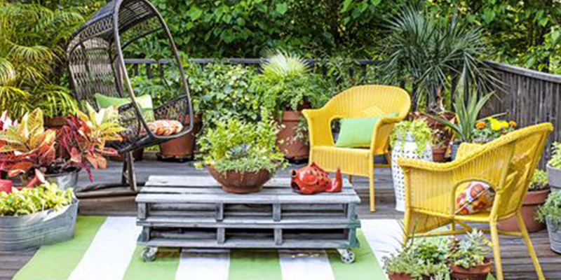 Renovate your Home and Garden with Plants