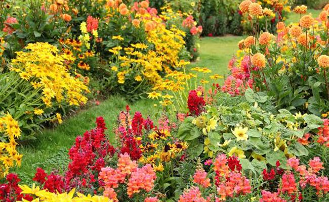 autumn season flowers