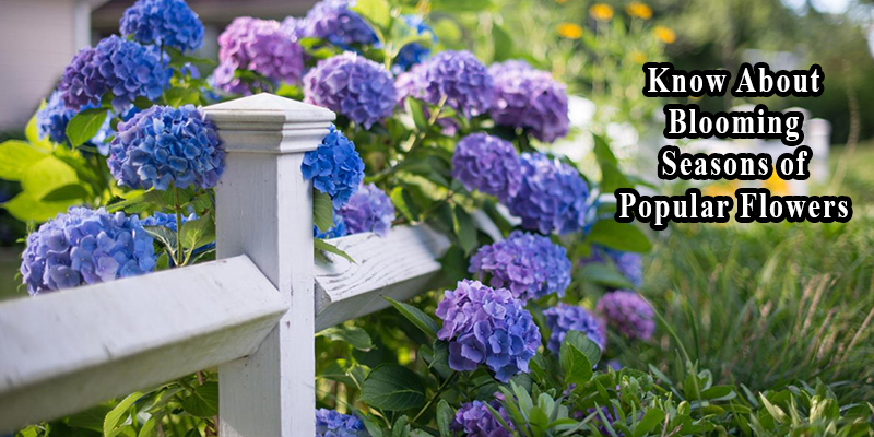 blooming seasons of popular flowers