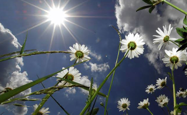 summer season flowers