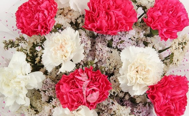 say sorry with carnations