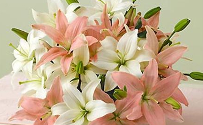 say sorry with lilies