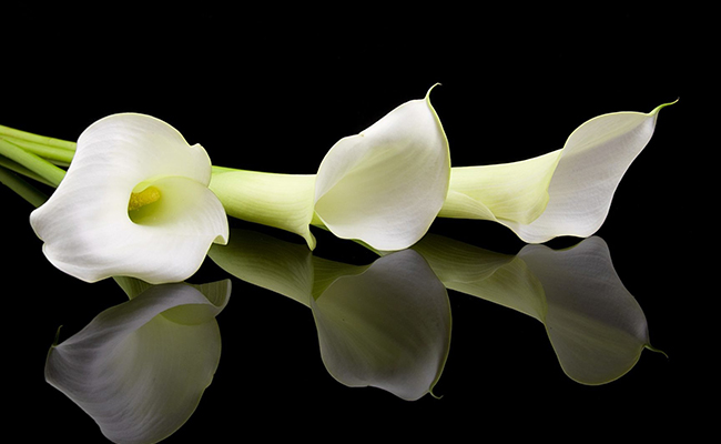 trumpet-shaped lilies