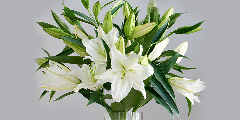 Know Why Lily Flowers Are So Special Speciality Of Lily Flowers