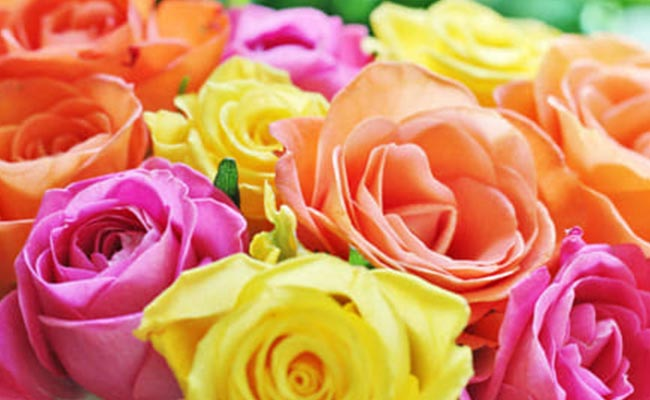 The History of Orange Roses