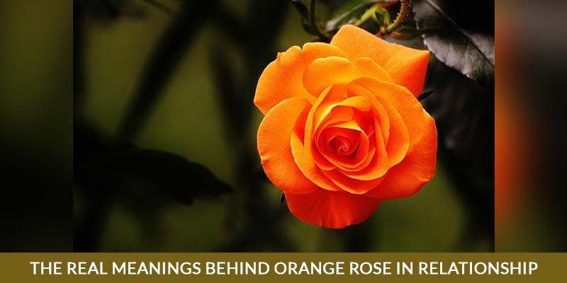 The Real Meanings Behind orange rose in relationship.