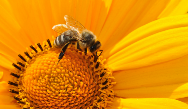 Top 10 Flowers For Attracting Bees