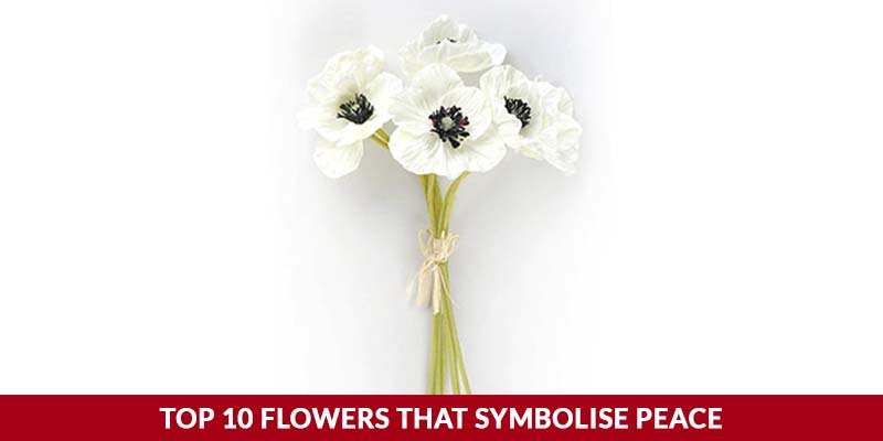 Top 10 Flowers That Symbolise Peace