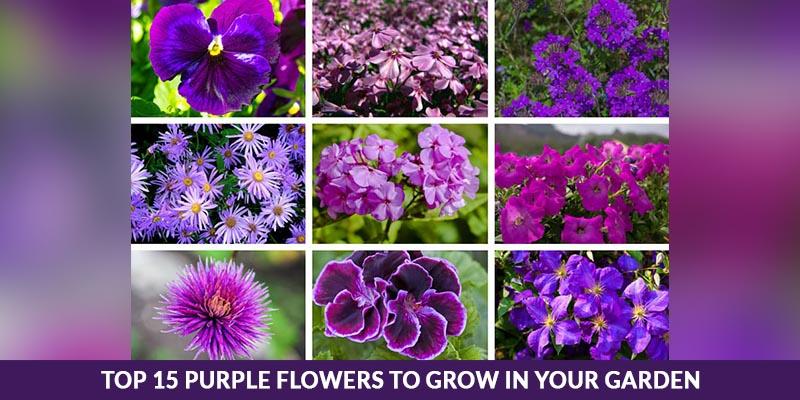 Top 15 Purple Flowers to Grow in Your Garden