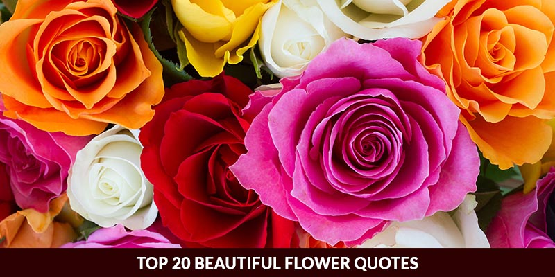 Top 20 Beautiful Flower Quotes