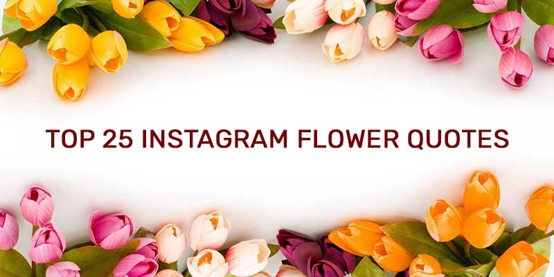 Top 25 Instagram Flower Quotes