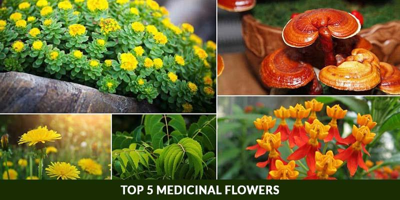 Top 5 Medicinal Flowers