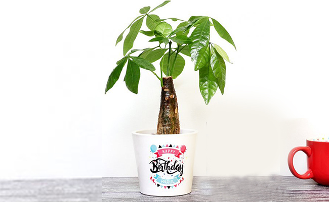 Plants with Personalised Vase