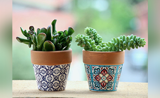 Potted Plants as a New Year Gift