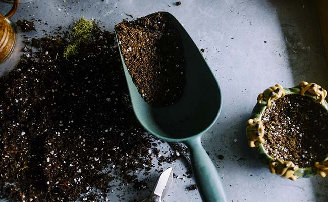 well-prepared-soil-to-grow-flowers