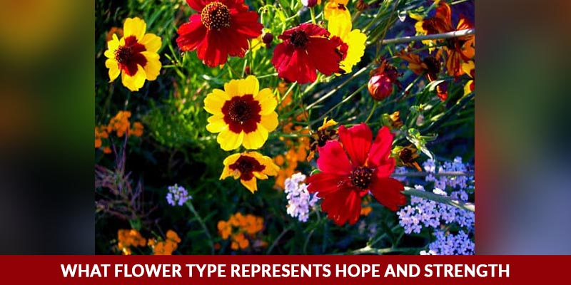 What Flower Type Represents Hope and Strength